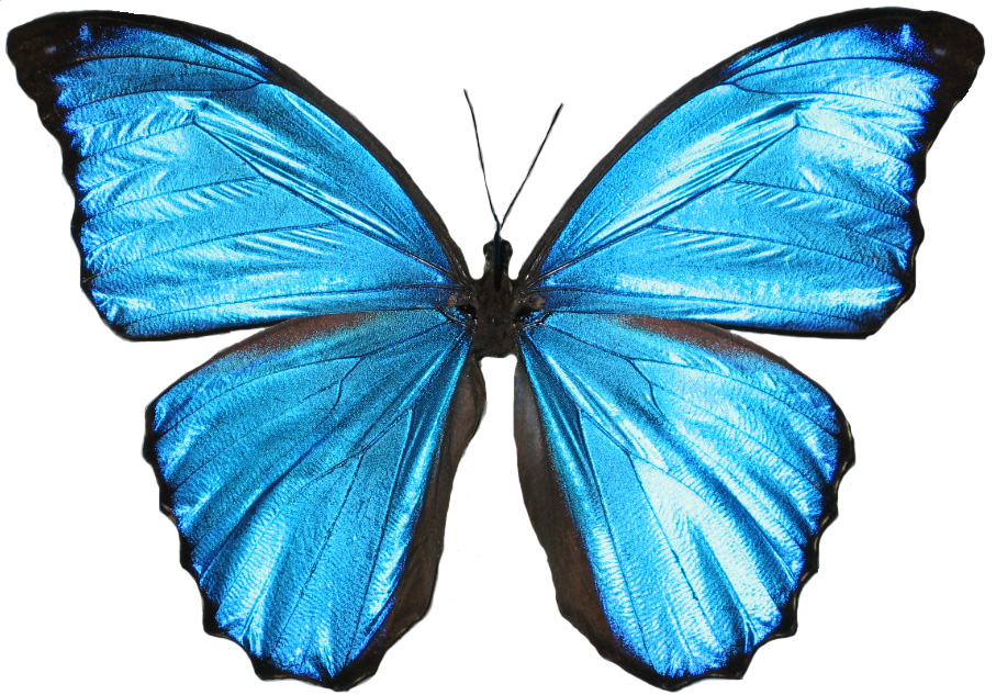 computer advanced data  ub098 ube44  uc608 uc81c butterfly cartoon clipart png flying butterfly clipart png